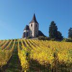 Aslace wine road
