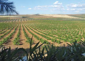 Extremadura wine country